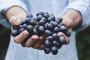 Extrait de raisin rouge